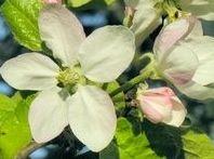 Wild & Edible Ornamental Plants
